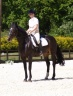 Dressage Sally & Polly May2010.jpg